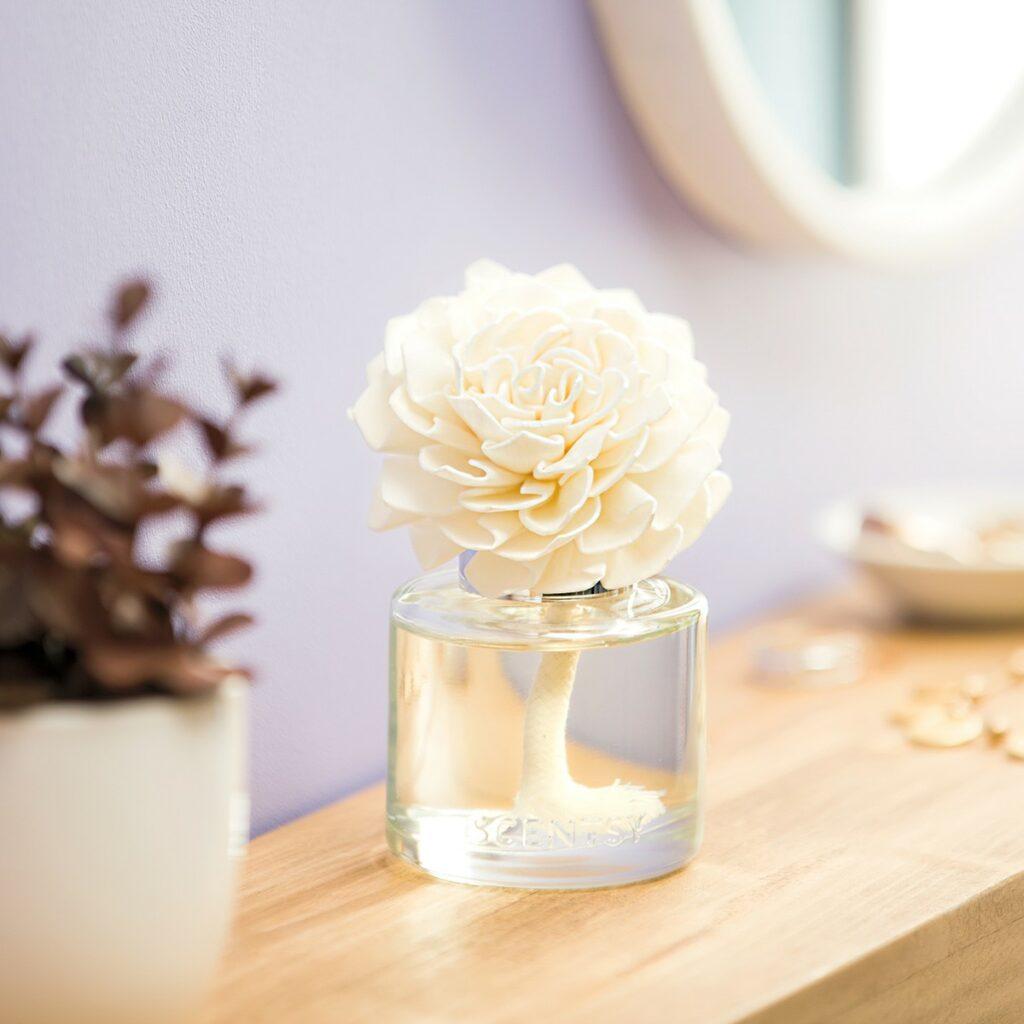 MT-FW21-FragranceFlower-DahliaDarling-R2_lowRes_-1024x1024 SCENTSY Duftlampen & Düfte Online SHOP